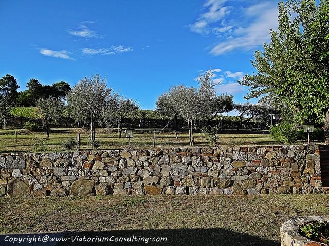 chianti_toscana_italia_ViatoriumConsulting (11)